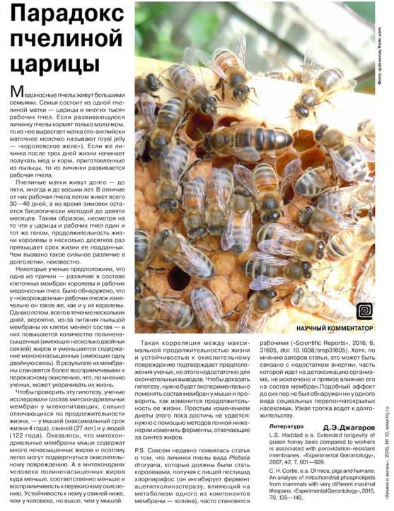 На фото:  Парадокс пчелиной царицы, автор: Dzhagarov